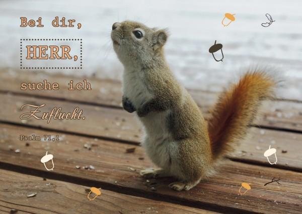 "Postkarte ""Eichhörnchen"""