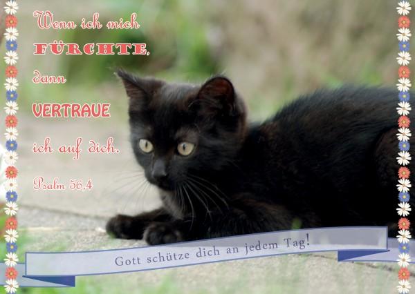 "Postkarte ""Katze"""