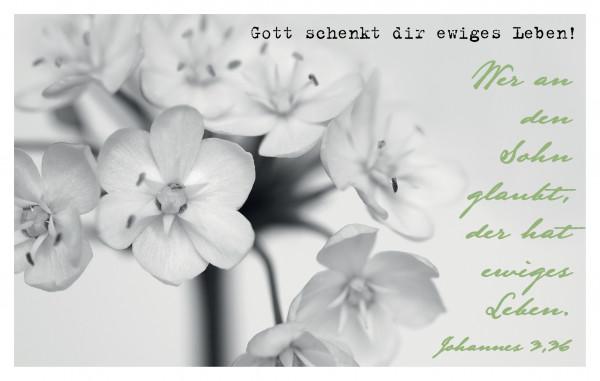 """Minikalender 2021 """"Gott schenkt dir ewiges Leben!"""""""