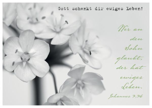 "Postkarte ""Gott schenkt dir ewiges Leben!"""